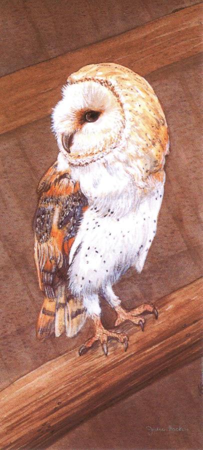 Magnetic Bookmark - Barn Owl