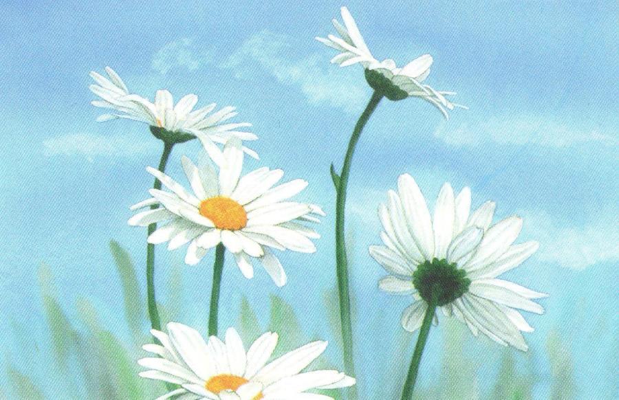 Rectangular Fridge Magnet - Daisy
