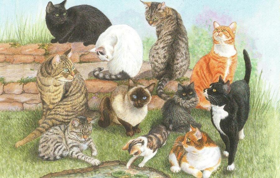 Rectangular Fridge Magnet - Catscape