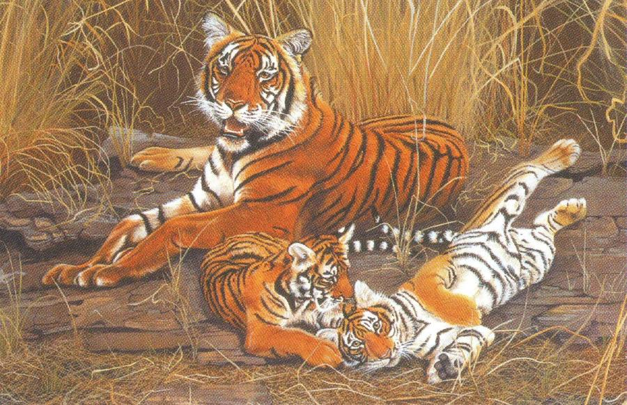 Rectangular Fridge Magnet - Tiger Tiger