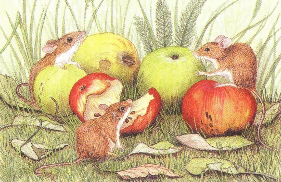Rectangular Fridge Magnet - Field Mice