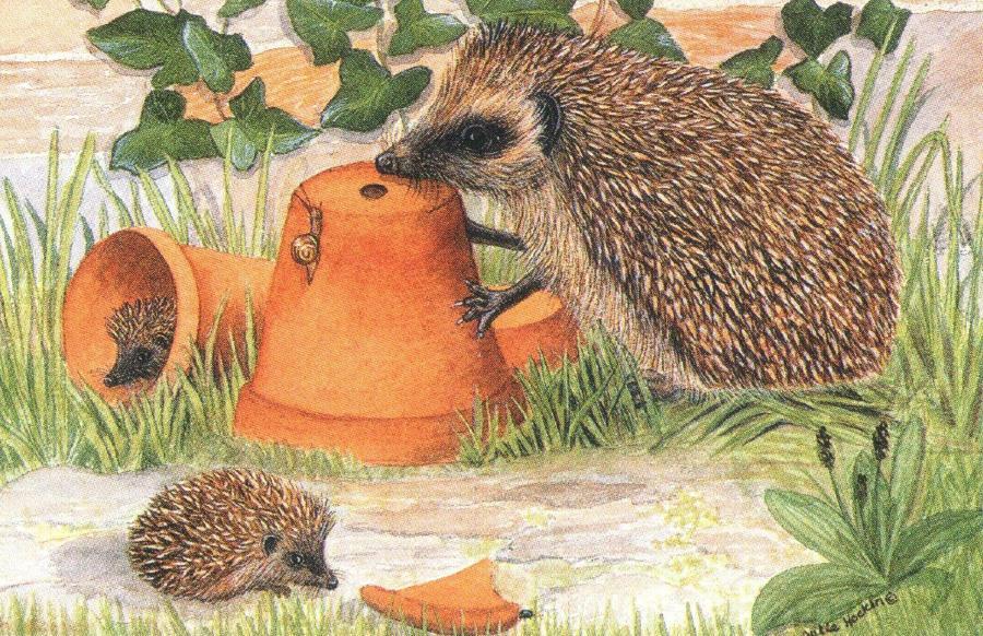 Rectangular Fridge Magnet - Hedgehogs & Pots