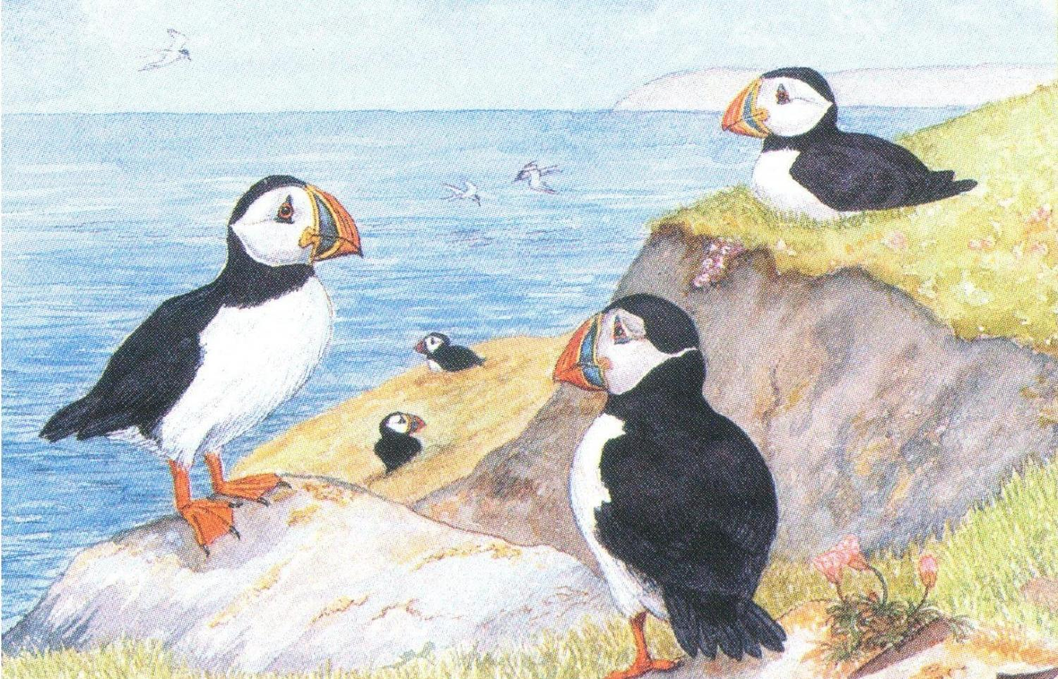 Rectangular Fridge Magnet - Puffins