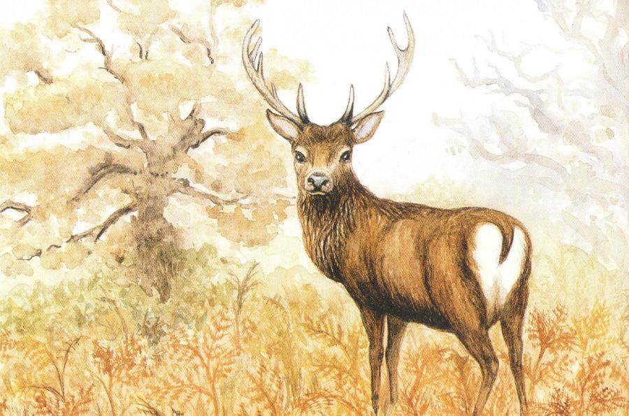 Rectangular Fridge Magnet - Red Deer Stag