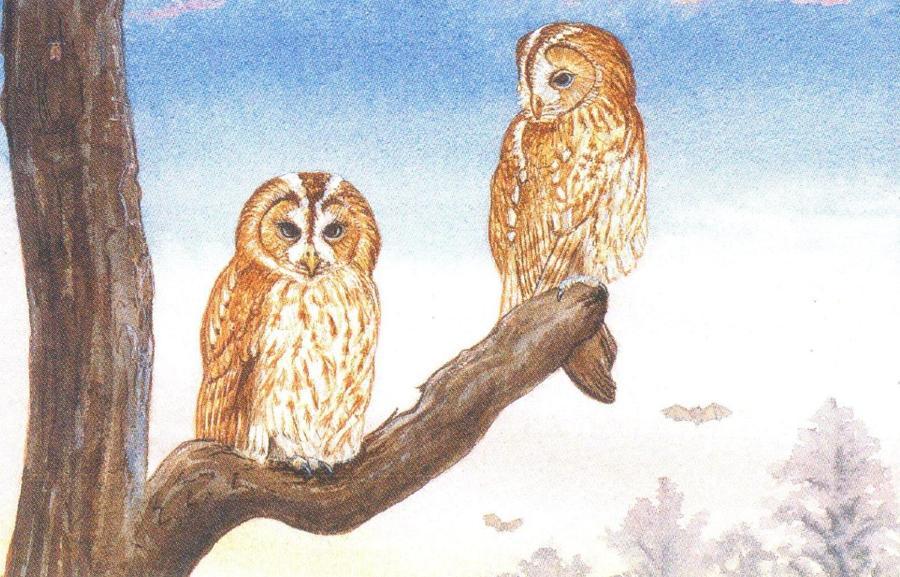 Rectangular Fridge Magnet - Tawny Owls at Sun