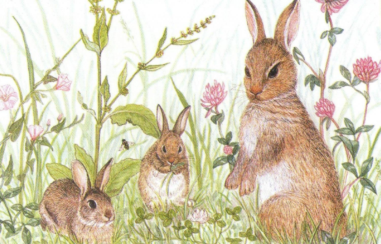 Rectangular Fridge Magnet - Rabbits