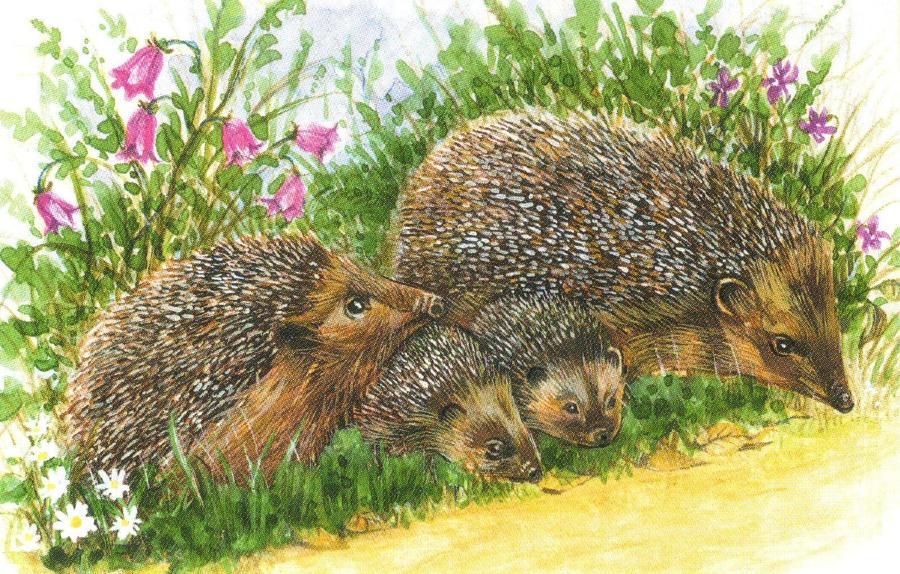 Rectangular Fridge Magnet - Hedgehog Family