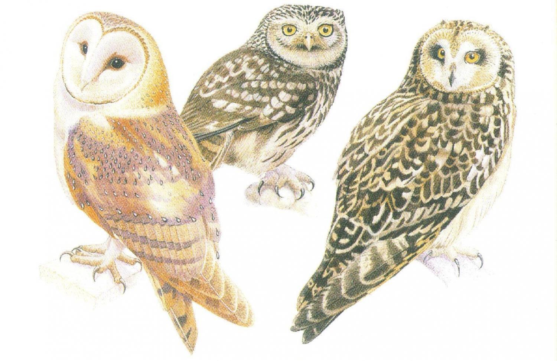 Rectangular Fridge Magnet - Owls