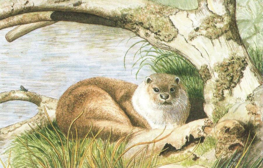 Rectangular Fridge Magnet - Taw the Otter