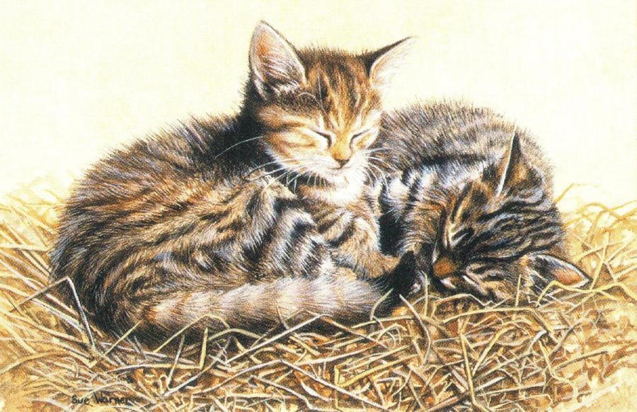 Rectangular Fridge Magnet - Cats in Straw