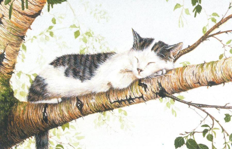 Rectangular Fridge Magnet - Cat Nap