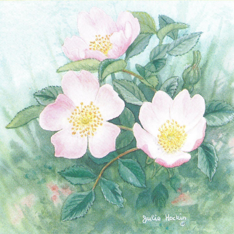 Square Fridge Magnet - Wild Rose