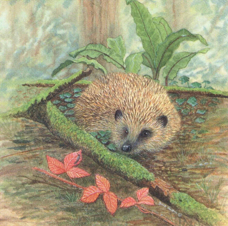 Square Fridge Magnet - Hedgehog
