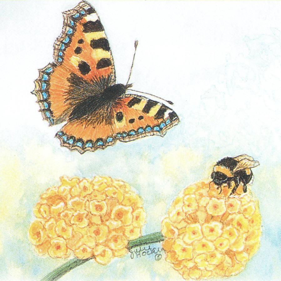 Square Fridge Magnet - Tortoiseshell Butterfl