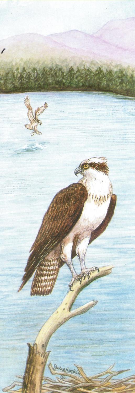 Bookmark - Osprey