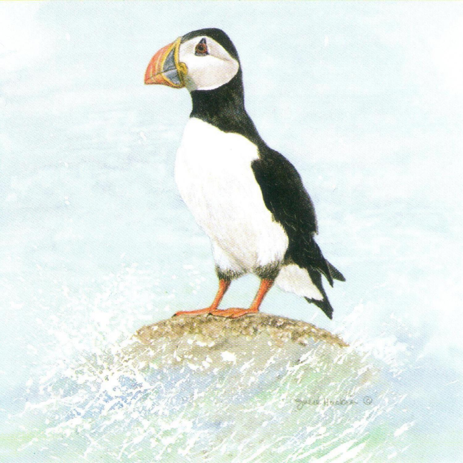 Square Fridge Magnet - Puffin