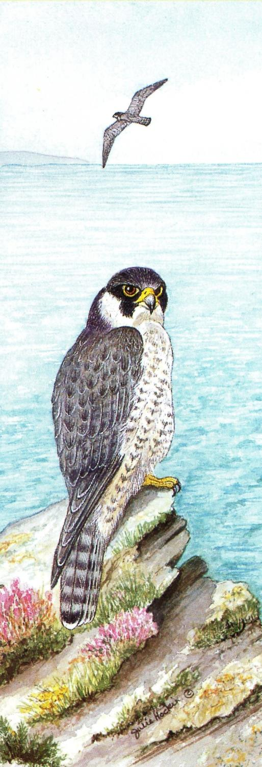 Bookmark - Peregrine Falcon