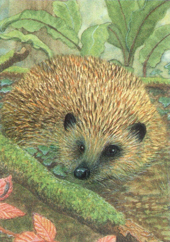 Rectangular Keyring - Hedgehog