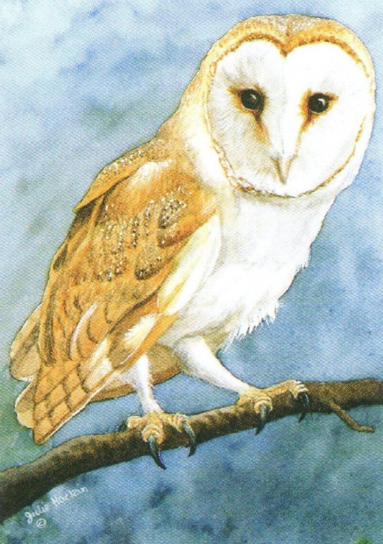 Rectangular Keyring - Barn Owl