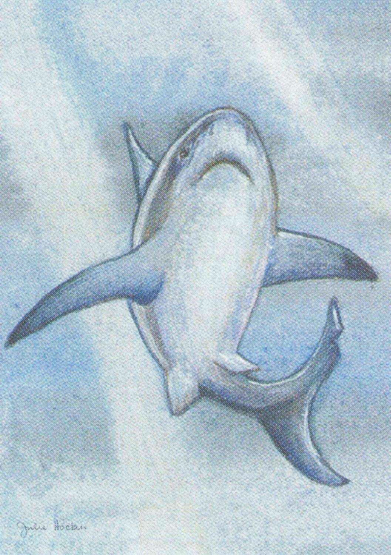 Rectangular Keyring - Shark