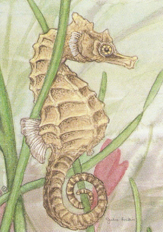 Rectangular Keyring - Seahorse