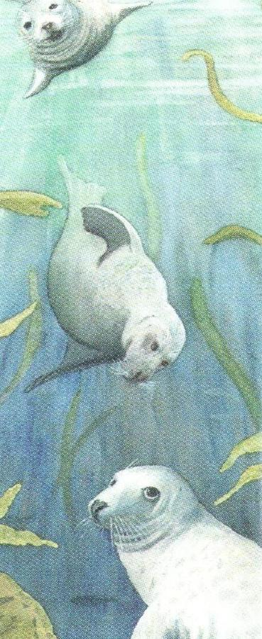 Mini Keyring - Grey Seals