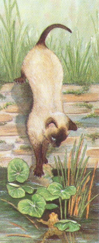 Mini Keyring - Siamese Cat