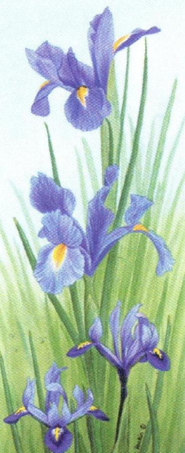 Mini Keyring - Iris
