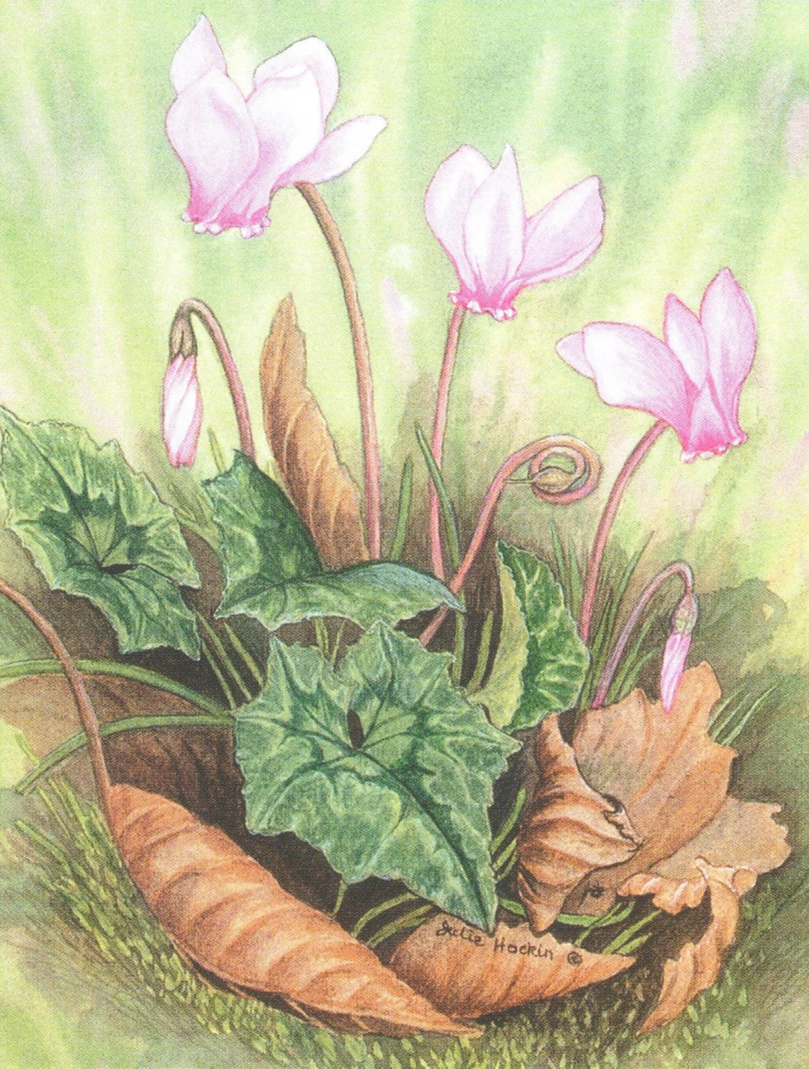 Pack of 5 Notecards - Cyclamen
