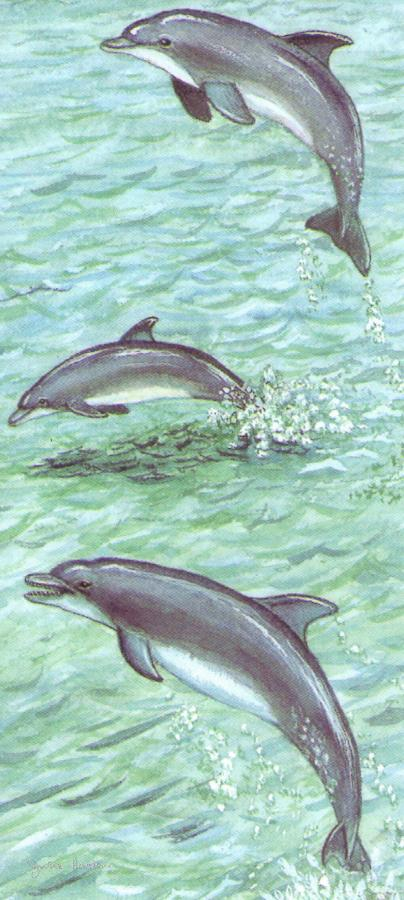 Magnetic Bookmark - Dolphins