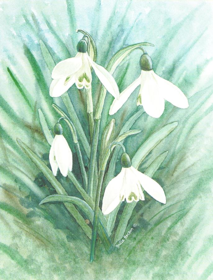 Pack of 5 Notecards - Snowdrop