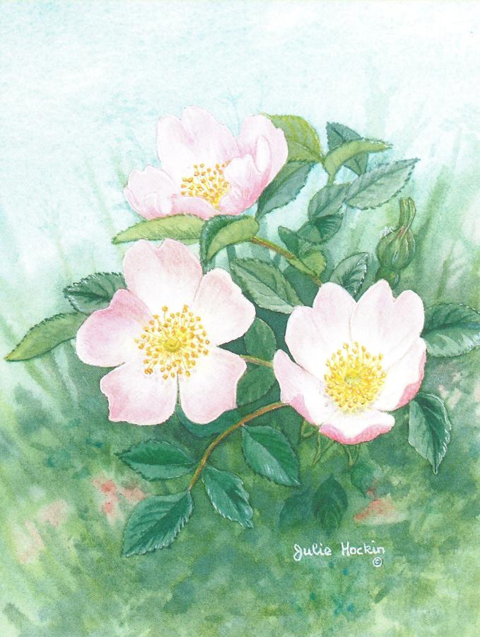 Pack of 5 Notecards - Wild Rose