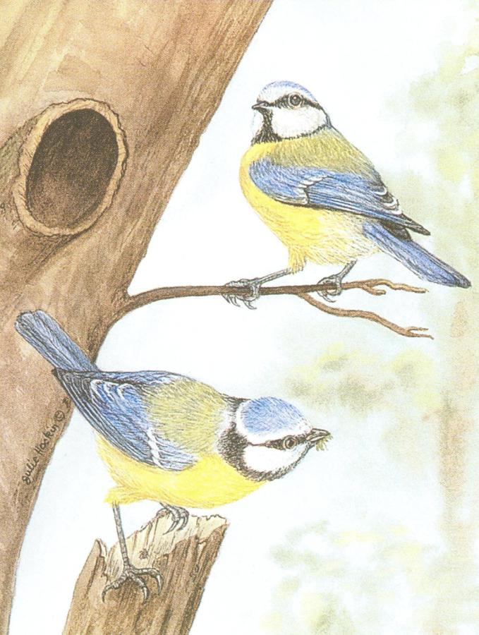 Pack of 5 Notecards - Blue Tit