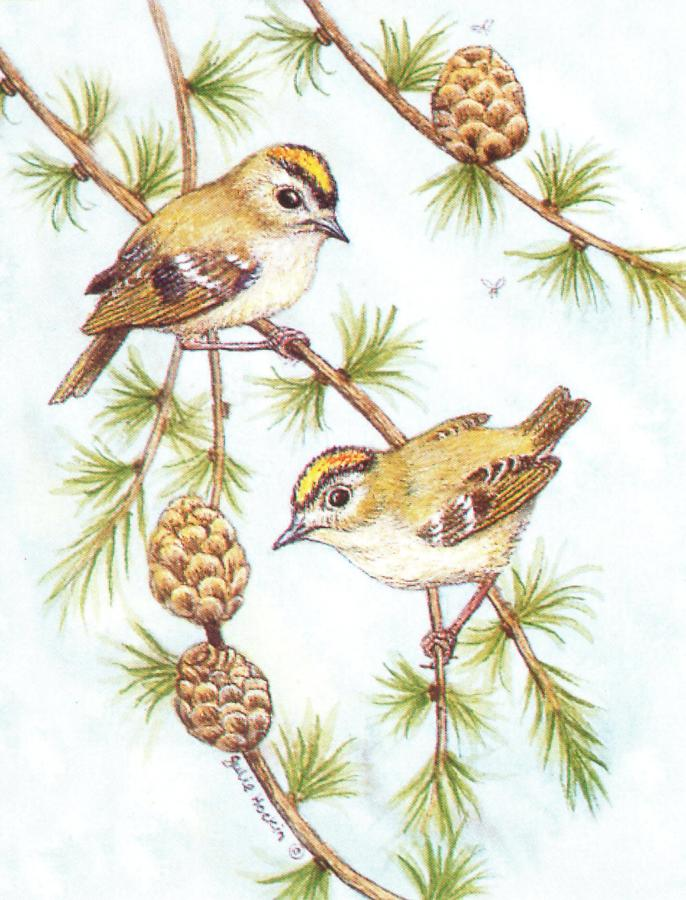 Pack of 5 Notecards - Goldcrest