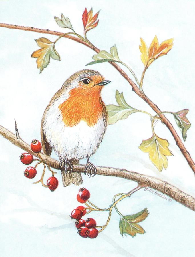 Pack of 5 Notecards - Robin