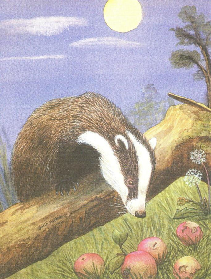 Pack of 5 Notecards - Badger
