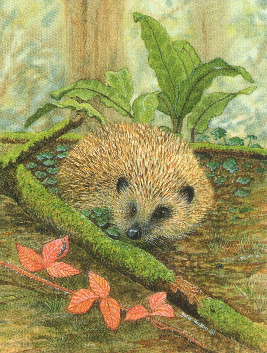 Pack of 5  Notecards - Hedgehog