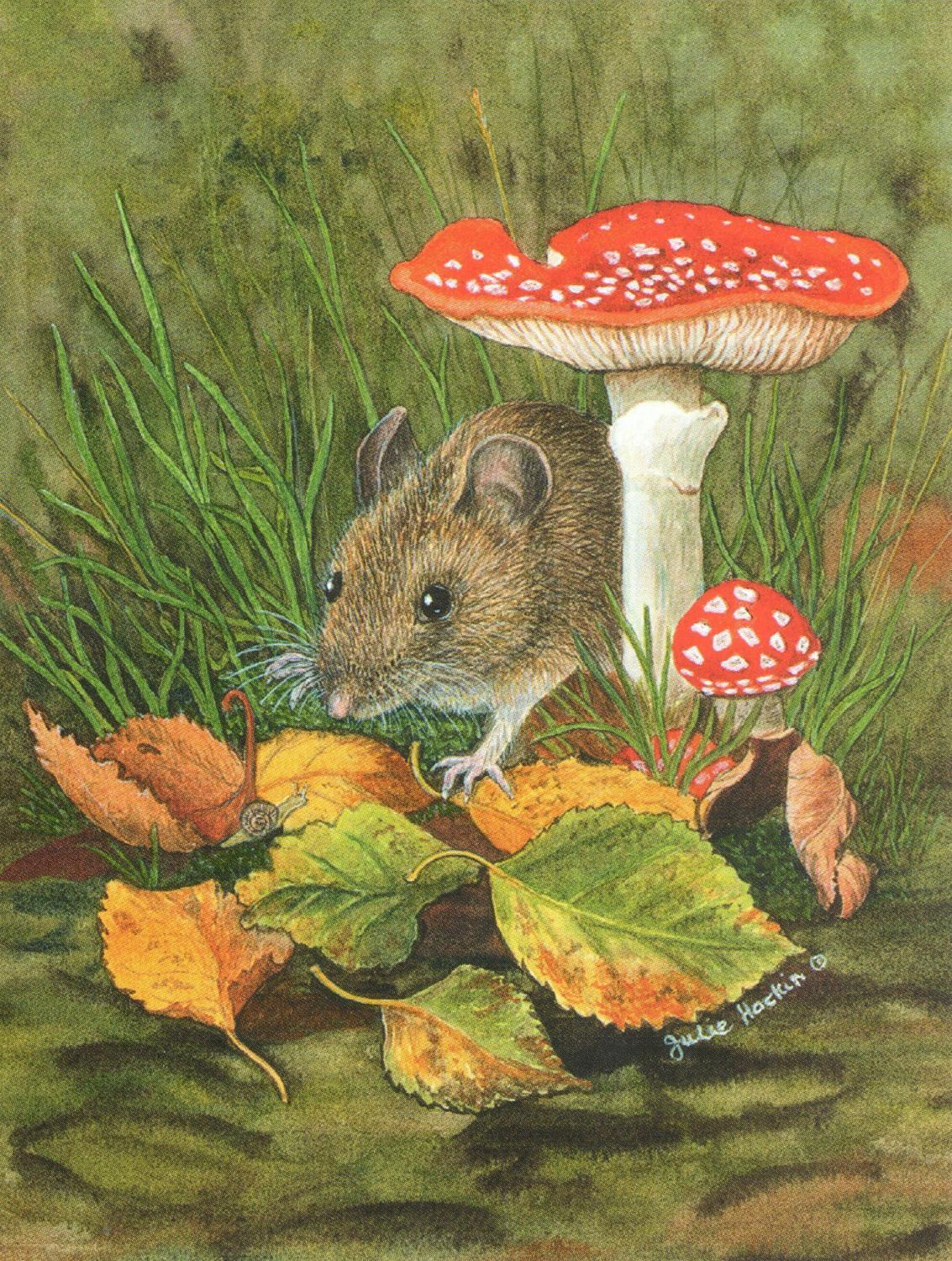 Pack of 5 Notecards - Woodmouse