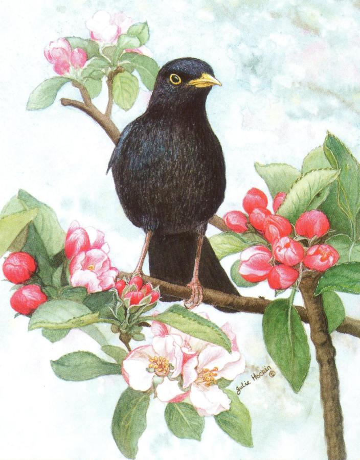 Pack of 5 Notecards - Blackbird