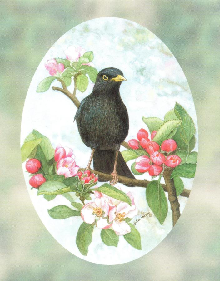 Pack of 5 Notecards - Blackbird (with border)