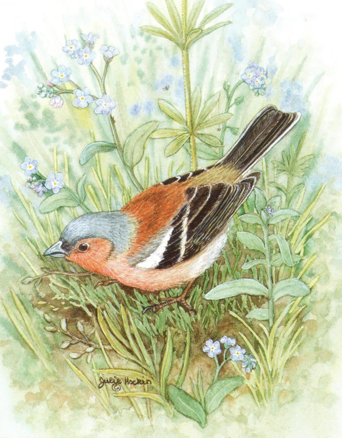Pack of 5 Notecards - Chaffinch