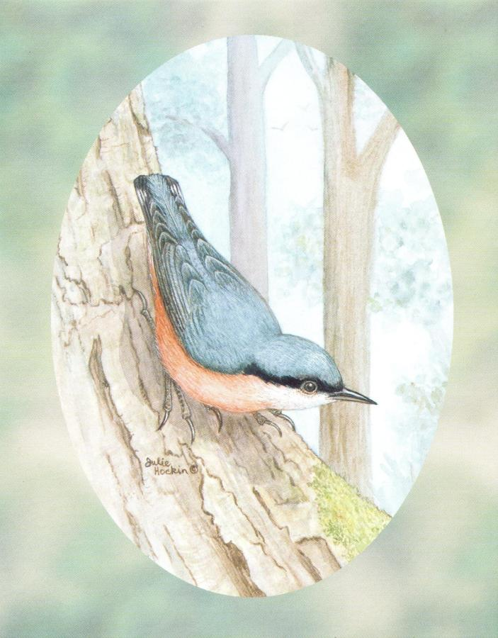 Pack of 5 Notecards - Nuthatch