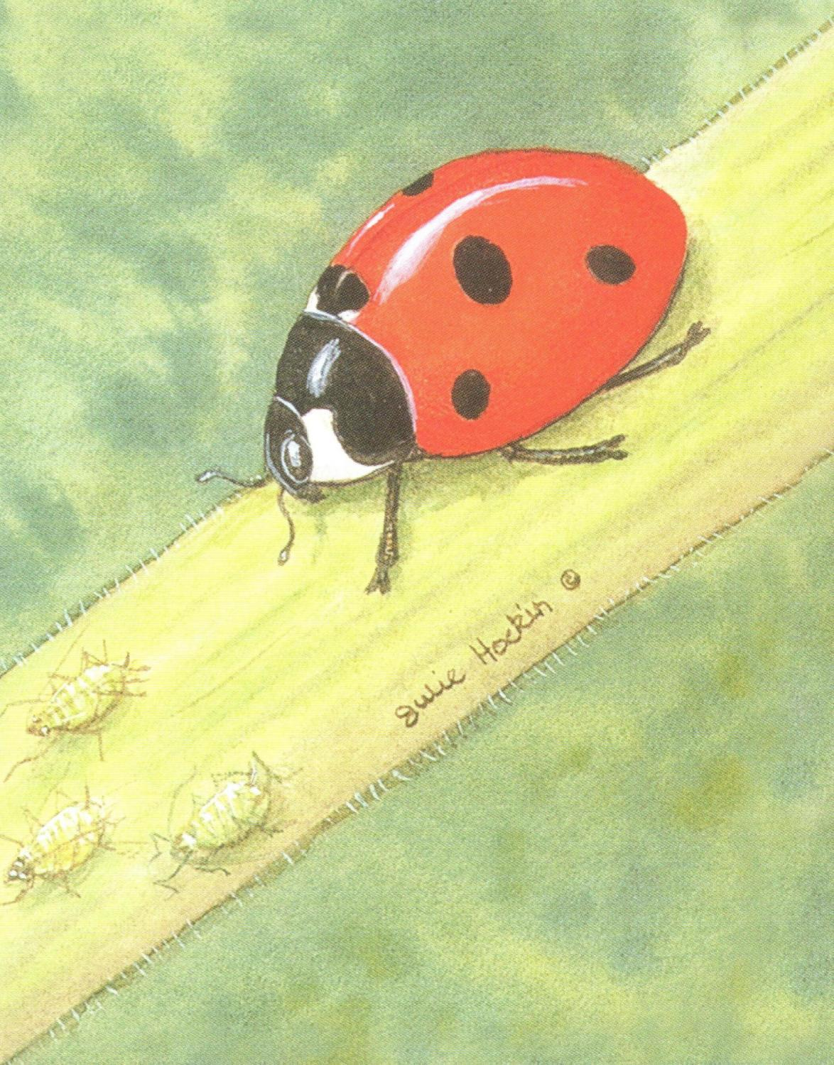 Pack of 5 Notecards - Ladybird