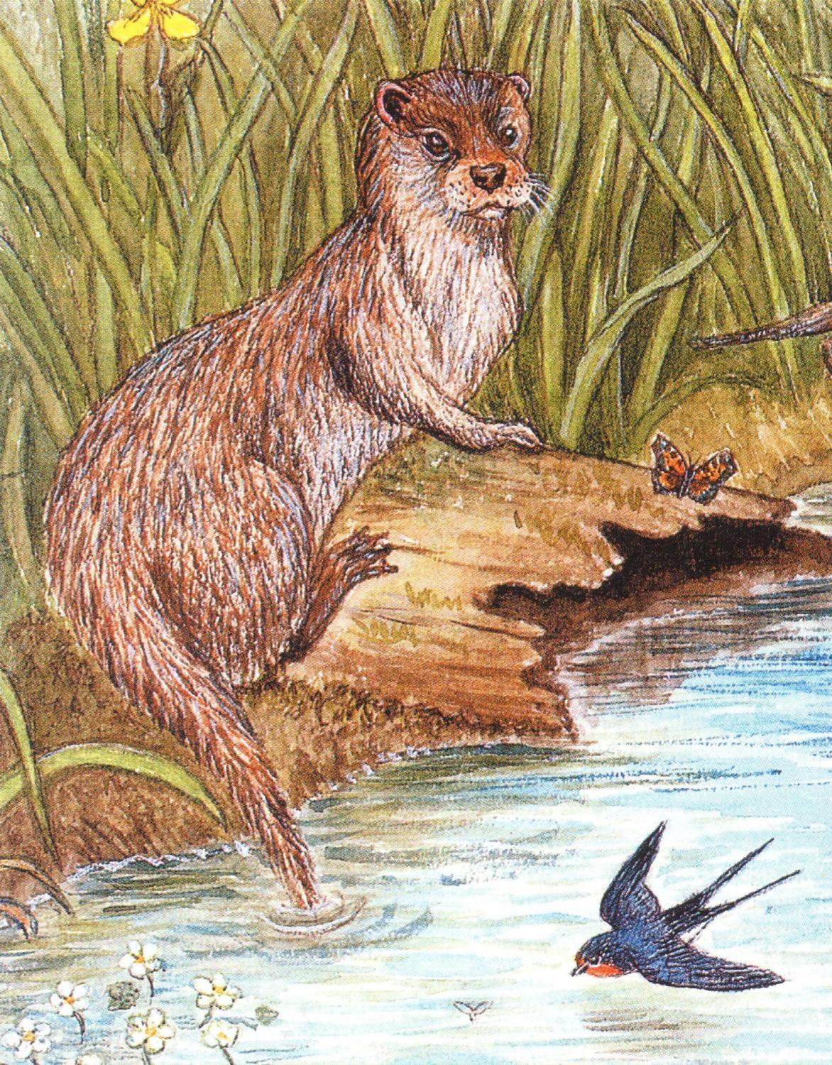 Pack of 5 Notecards - Otter