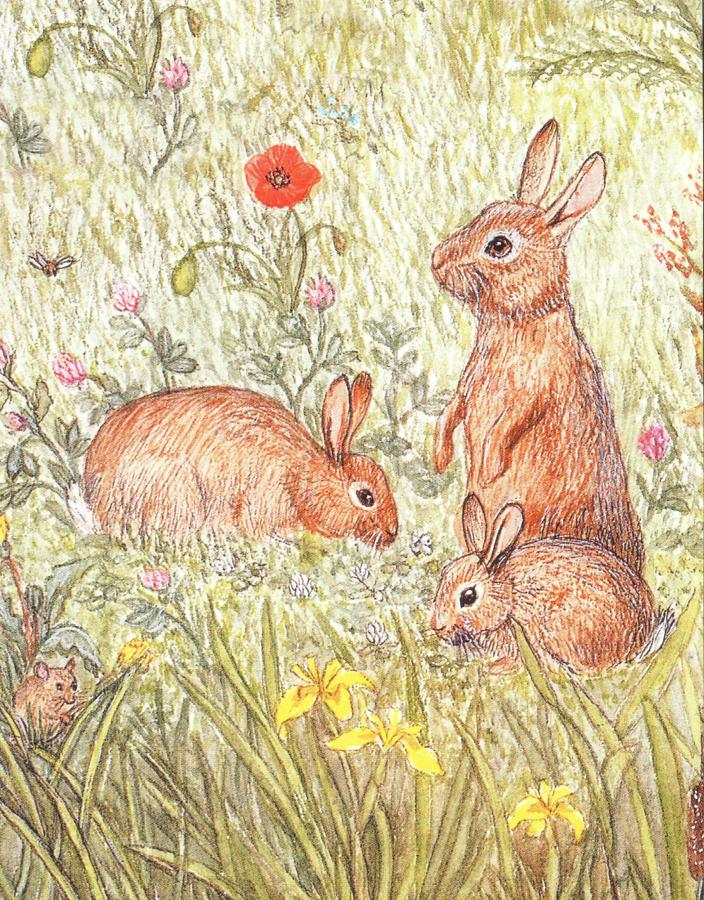 Pack of 5 Notecards - Rabbits