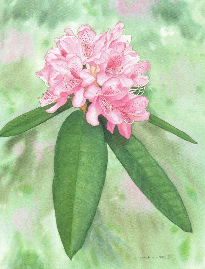 Pack of 5 Notecards - Rhododendron
