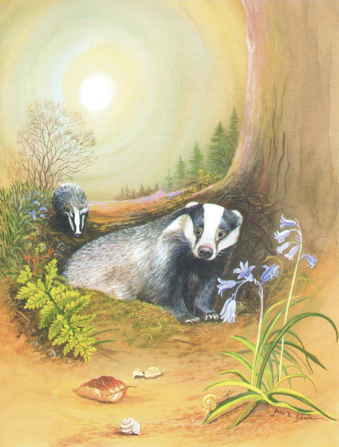Pack of 5 Notecards - Badgers at Night