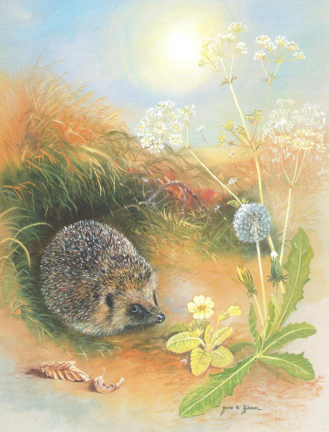 Pack of 5 Notecards - Hedgehog & Dandilion