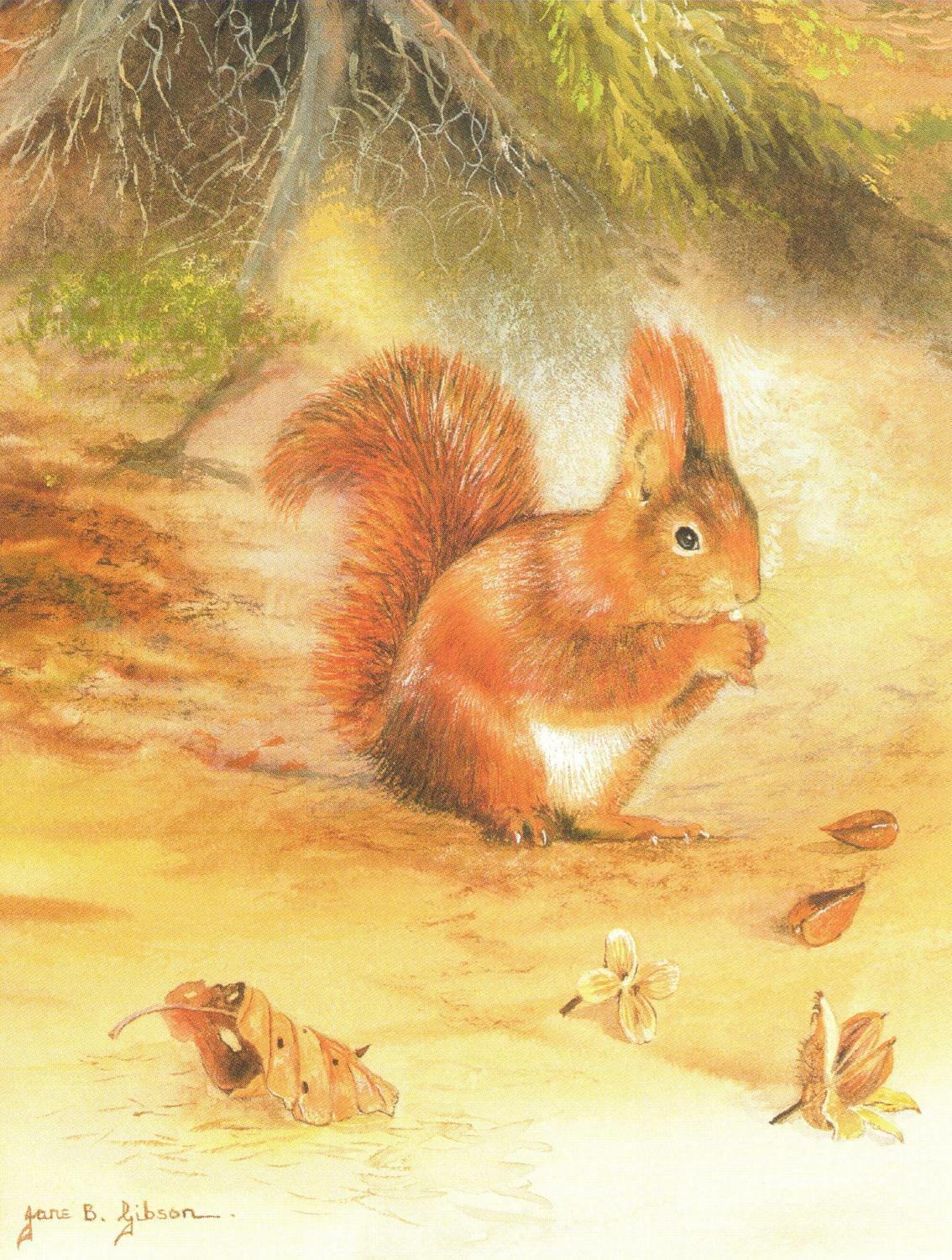 Pack of 5 Notecards - Red Squirrel