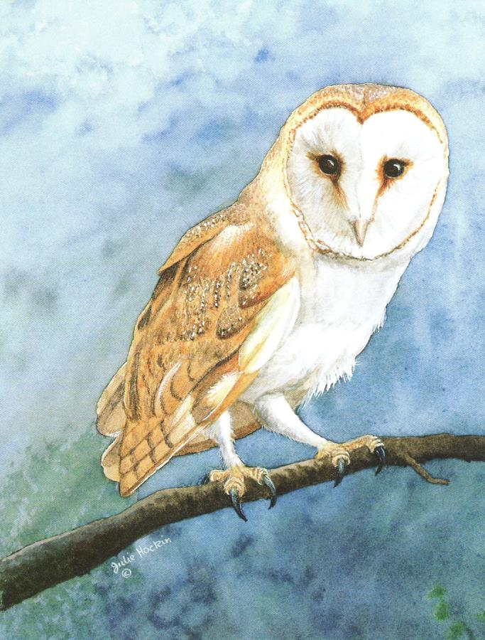 Pack of 5 Notecards - Barn Owl
